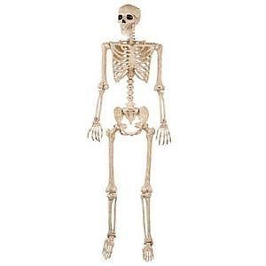 A skeleton. Which represents the fact that I'm one of those adults who completely fails to feed himself.
